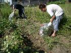 今日の成る実ファーム(2010/9/12)草刈&試し掘り